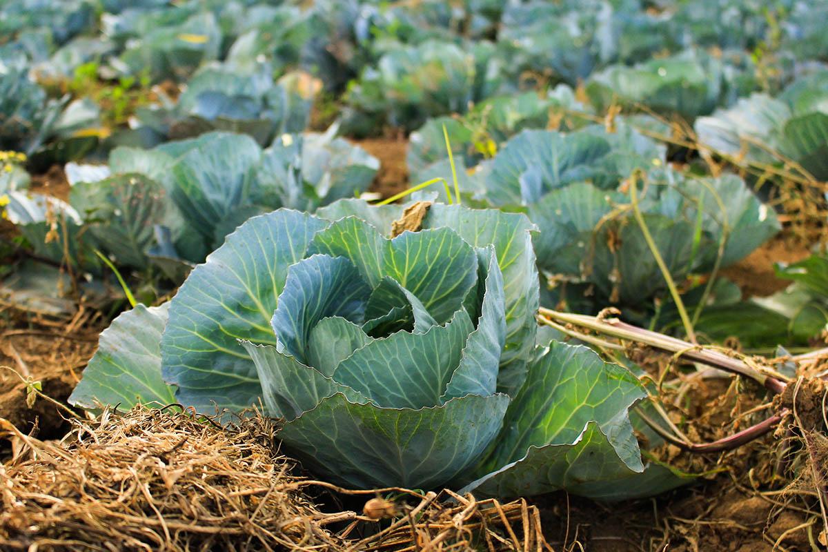 Agricoltura biologica e scienza